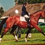 Yvonne Huijting paard